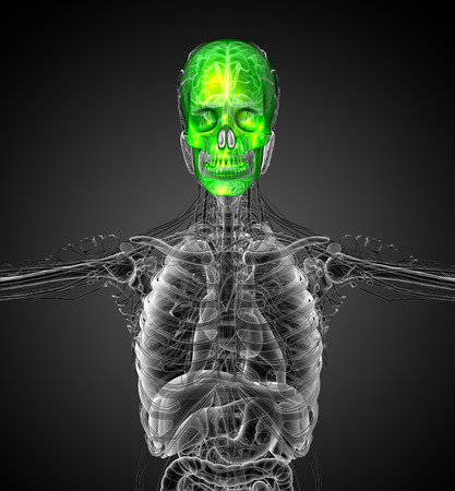 mandible: 3d render medical illustration of the human skull - front view