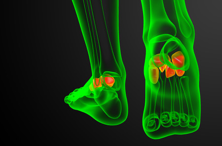 cuboid: 3d render medical illustration of the midfoot bone - back view Stock Photo