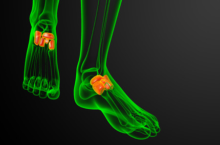 cuboid: 3d render medical illustration of the midfoot bone - front view