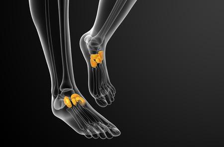 3d bone: 3d render medical illustration of the midfoot bone - front view