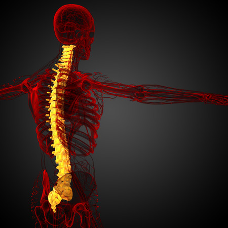 vertebra: 3d render medical illustration of the human spine - side view
