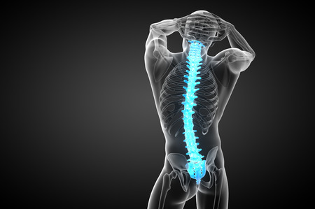 thoracic: 3d render medical illustration of the human spine - back view