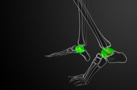 talus: 3d ilustraci�n del hueso astr�galo - vista lateral