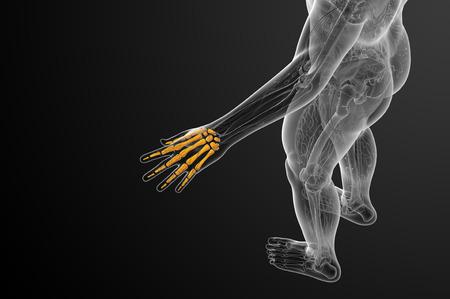 skeleton hand: 3d render illustration of the skeleton hand - top view Stock Photo