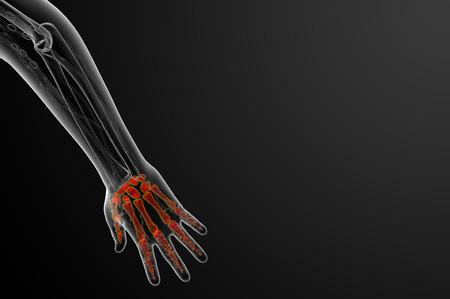 phalanx: 3d render illustration of the skeleton hand - top view Stock Photo
