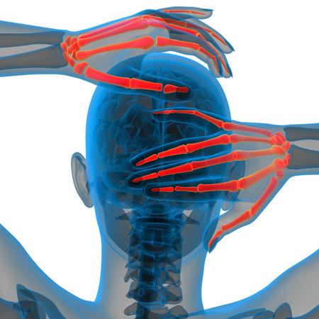 skeleton hand: 3d render illustration of the skeleton hand - back view
