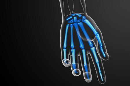 huesos humanos: 3d ilustración de la mano de esqueleto - vista frontal