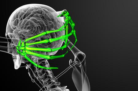 skeleton hand: 3d render illustration of the skeleton hand - side view