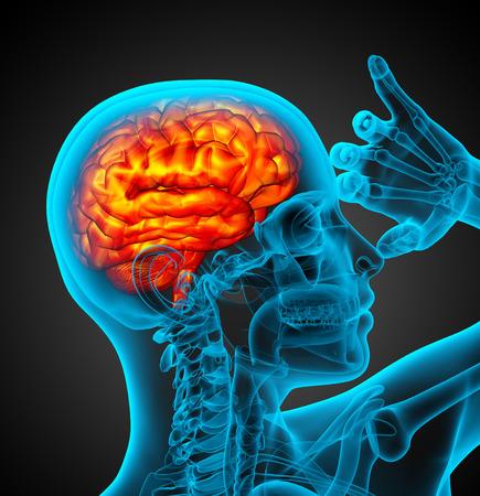 hipofisis: 3d ilustraci�n m�dica del cerebro humano - vista lateral Foto de archivo