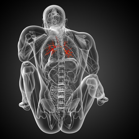 physiology: 3D medical illustration of the male bronchi - back view