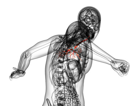 lobes: 3D medical illustration of the male bronchi - back view