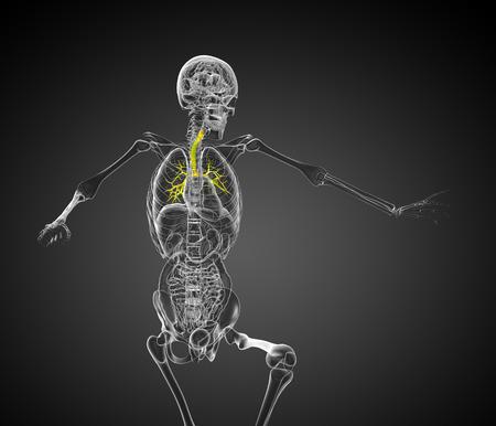 lung bronchus: 3d render medical 3d illustration of the bronchi  - front view