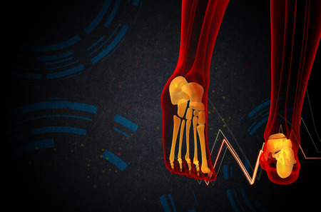 3d bone: 3d render medical illustration of the foot bone - back view Stock Photo