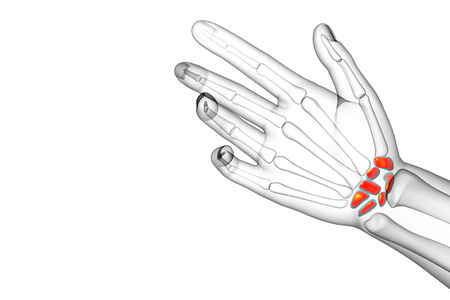 proximal: 3d rendered illustration of the human carpal bones - back view