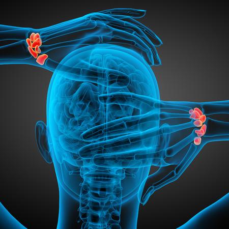 distal: Illustrazione di rendering 3D delle ossa carpali umane - Vista di dietro Archivio Fotografico
