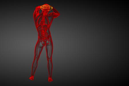 distal: 3d rindi� la ilustraci�n de los huesos del carpo humanos - vista posterior