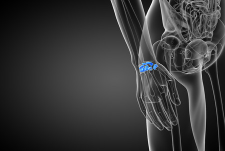proximal: 3d rendered illustration of the human carpal bones - side view