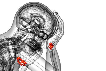 distal: 3d rindi� la ilustraci�n de los huesos del carpo humanos - vista lateral
