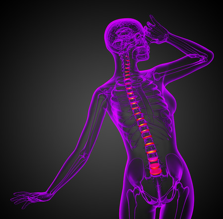 spinal disc: 3D medical illustration of the spinal disc - front view Stock Photo
