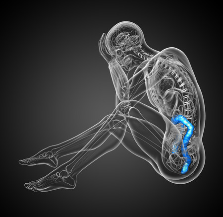 large intestine: Human digestive system large intestine - side view Stock Photo