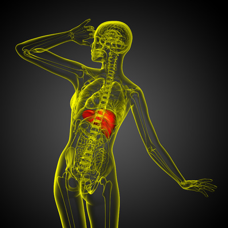 bellyache: 3d render medical illustration of the liver - back view