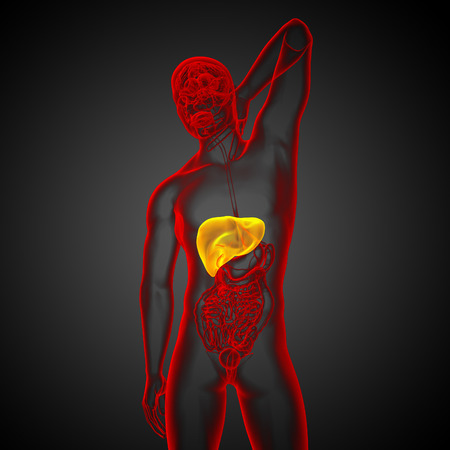 bellyache: 3d render medical illustration of the liver - front view Stock Photo