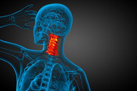 cervicales: 3d ilustraci�n m�dica de la columna cervical - vista posterior