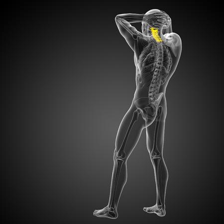 physiology: 3d render medical illustration of the cervical spine - back view