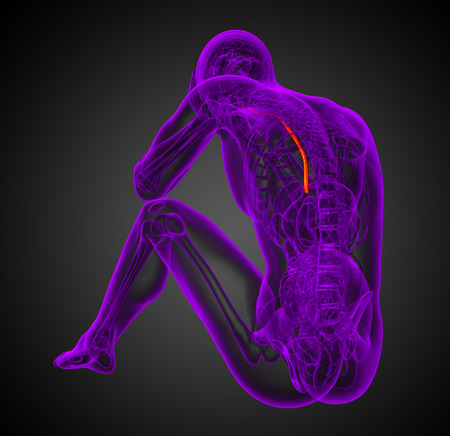 esophagus: 3d render medical illustration of the esophagus - back view