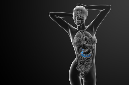 biliary: 3d render medical illustration of the gallblader and pancrease - front view