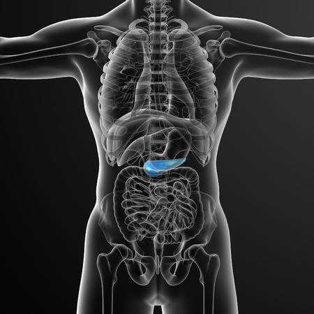 duodenum: 3d render medical illustration of the gallblader and pancrease - front view