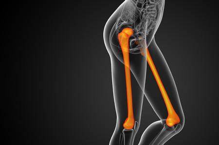 femur: 3d render medical illustration of the femur bone - side view