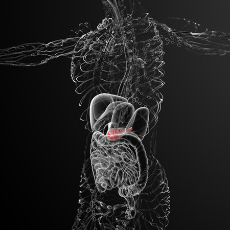 pancreatic: 3d render medical illustration of the gallblader and pancrease - side view