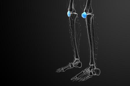 patella: 3d render medical illustration of the patella bone - side view