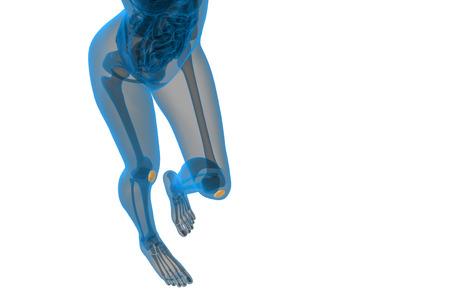 patella: 3d render medical illustration of the patella bone - top view