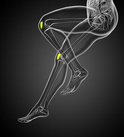 patella: 3d render medical 3d illustration of the patella bone - side view