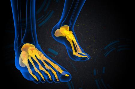 3d bone: 3d render medical illustration of the foot bone - front view