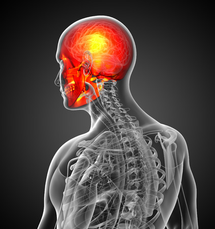 ethmoid: 3d render medical illustration of the human skull - side view Stock Photo