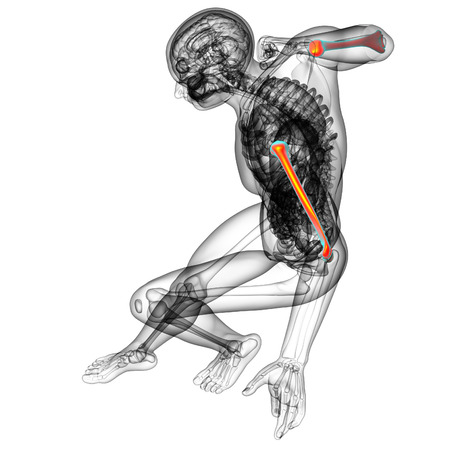 3d bone: 3d render medical illustration of the humerus bone - top view
