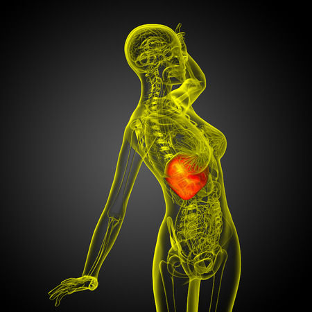 bellyache: 3d render medical illustration of the liver - side view Stock Photo