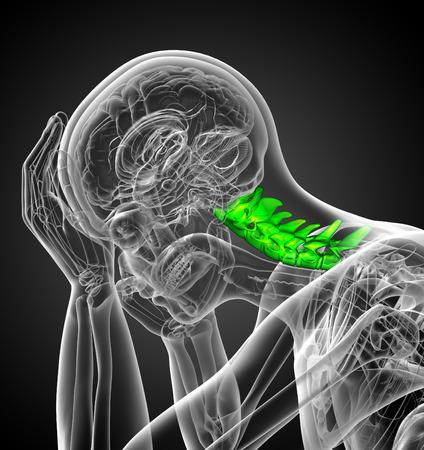 columna vertebral: 3d ilustraci�n m�dica de la columna cervical - vista lateral Foto de archivo