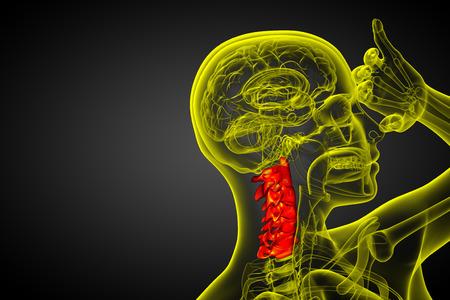 physiology: 3d render medical illustration of the cervical spine - side view