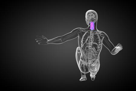 cervicales: 3d ilustraci�n m�dica de la columna cervical - vista lateral Foto de archivo