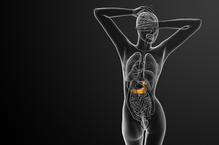 biliary: 3d render medical illustration of the gallblader and pancrease - back view