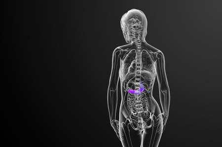 pancreatic: 3d render medical illustration of the gallblader and pancrease - back view
