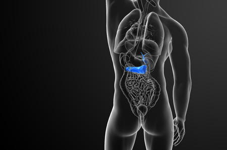 duodenum: 3d render medical illustration of the gallblader and pancrease - back view