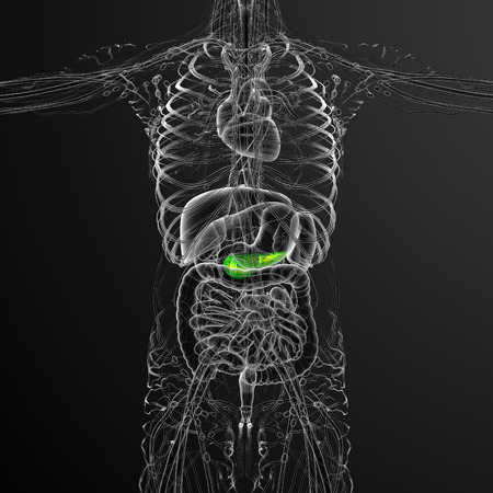 pancreatic: 3d render medical illustration of the gallblader and pancrease - front view
