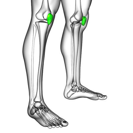 3d render medical illustration of the patella bone - side view illustration