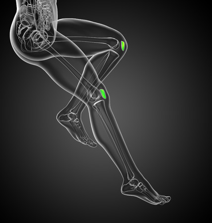 patella: 3D medical illustration of the patella bone - side view