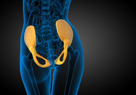 3D medical illustration of the pelvis bone - back view illustration